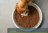 What is the Best Dog Food for Senior Dogs?