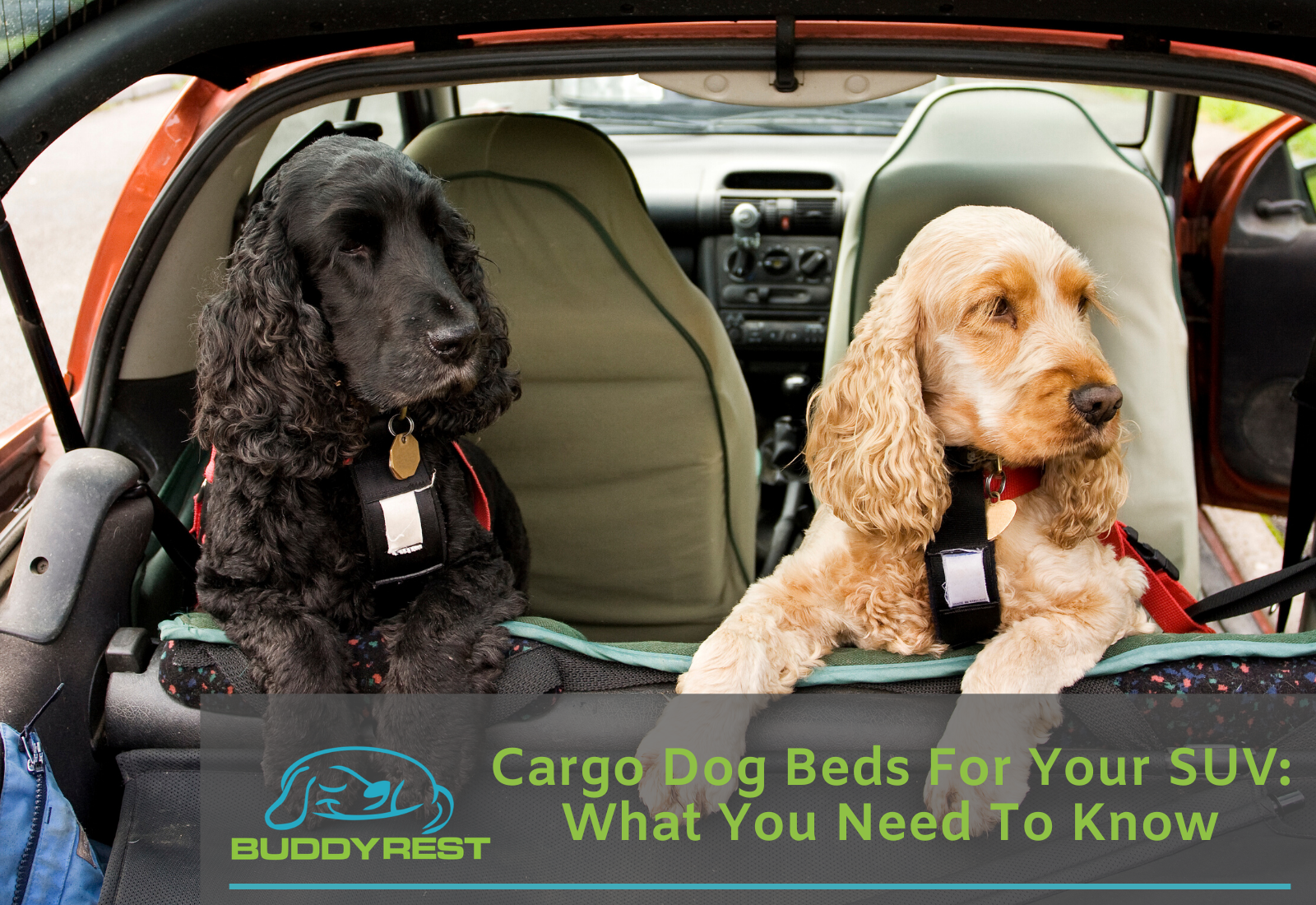 Cargo Dog Beds for Your SUV: What You Need to Know