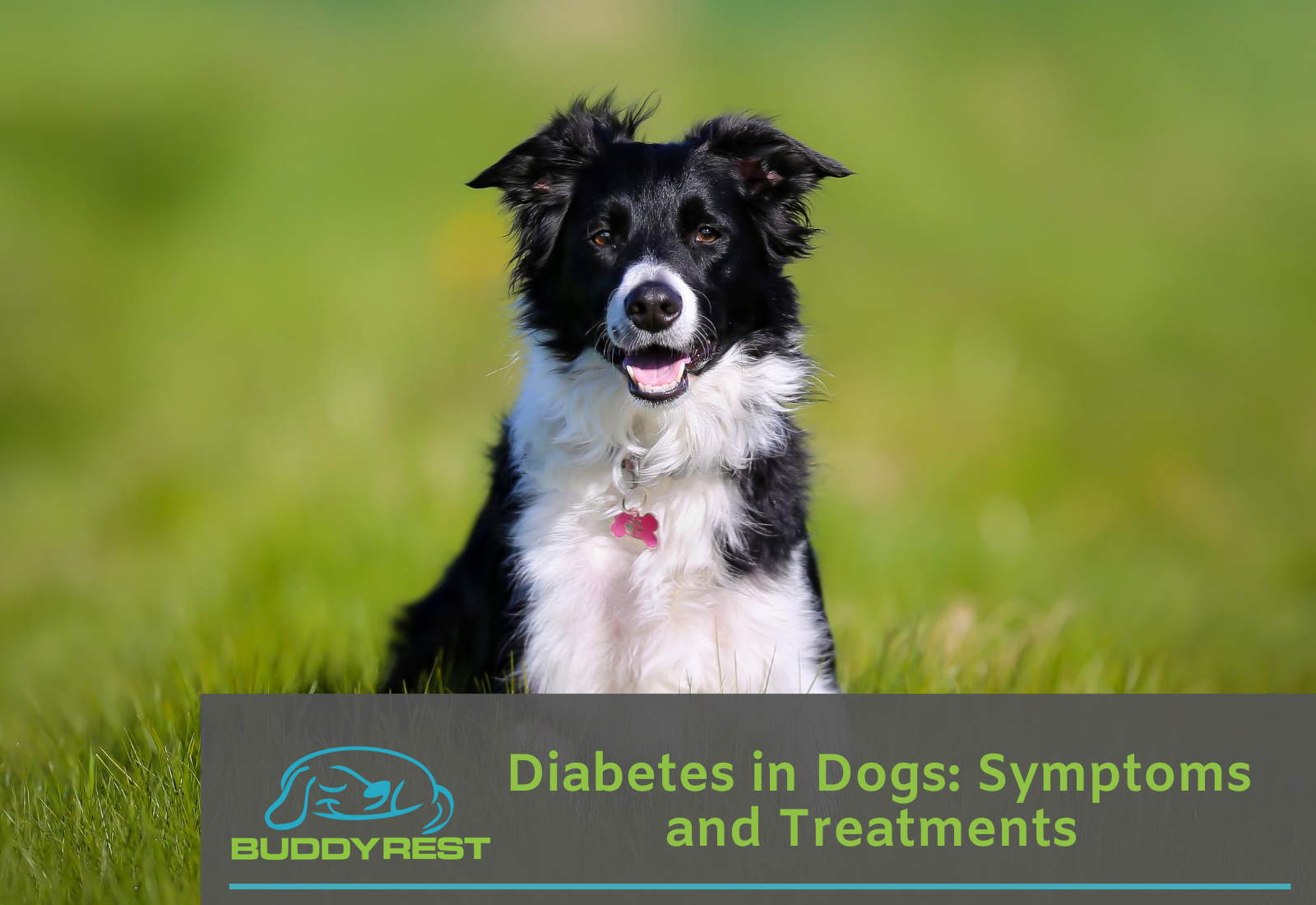 Diabetes in Dogs: Symptoms and Treatments