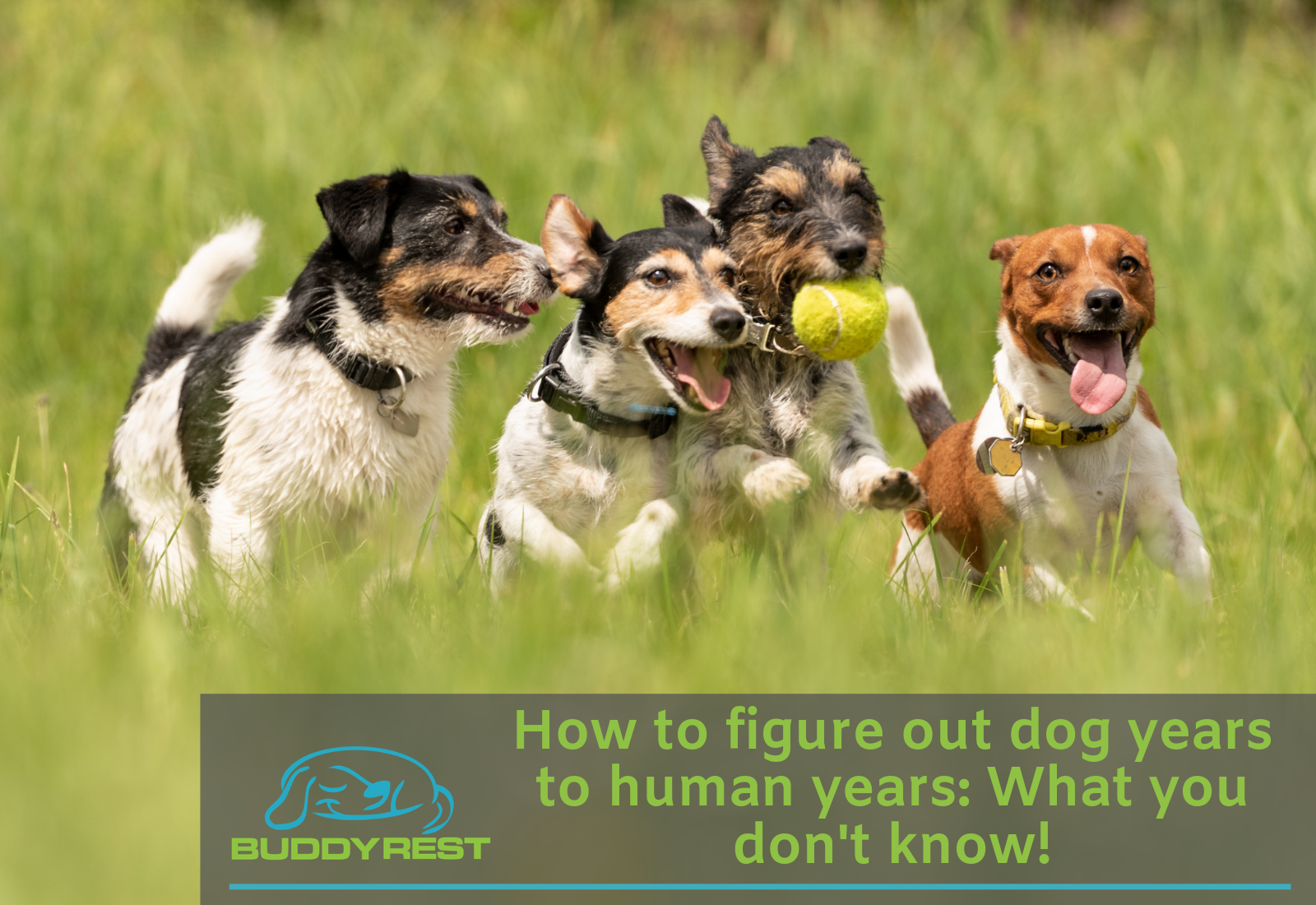 How to figure out dog years to human years: What you don't know!