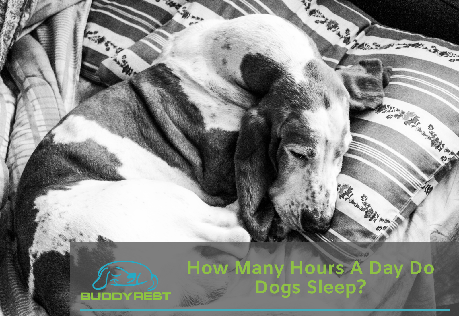 How Many Hours a Day Do Dogs Sleep?