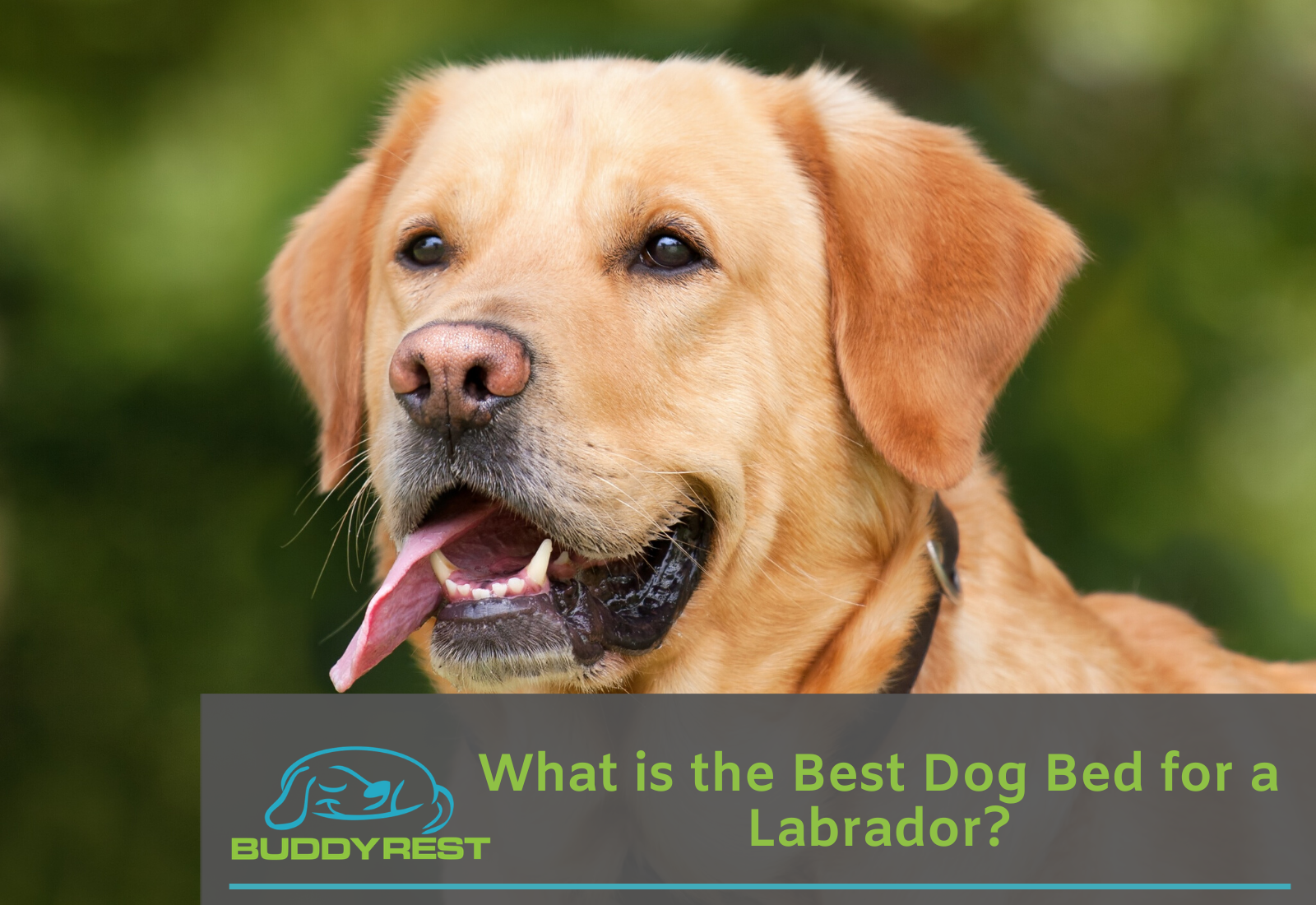 What is the Best Dog Bed for a Labrador?