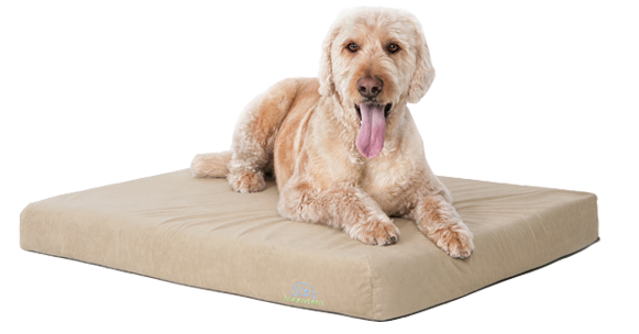 BuddyRest unveils deluxe orthopedic dog bed line
