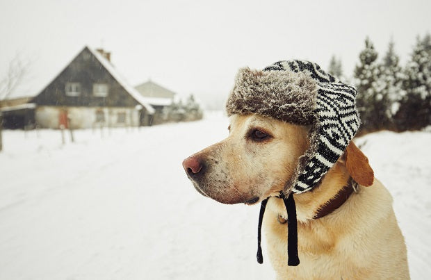 7 Important Winter Dog Care Tips