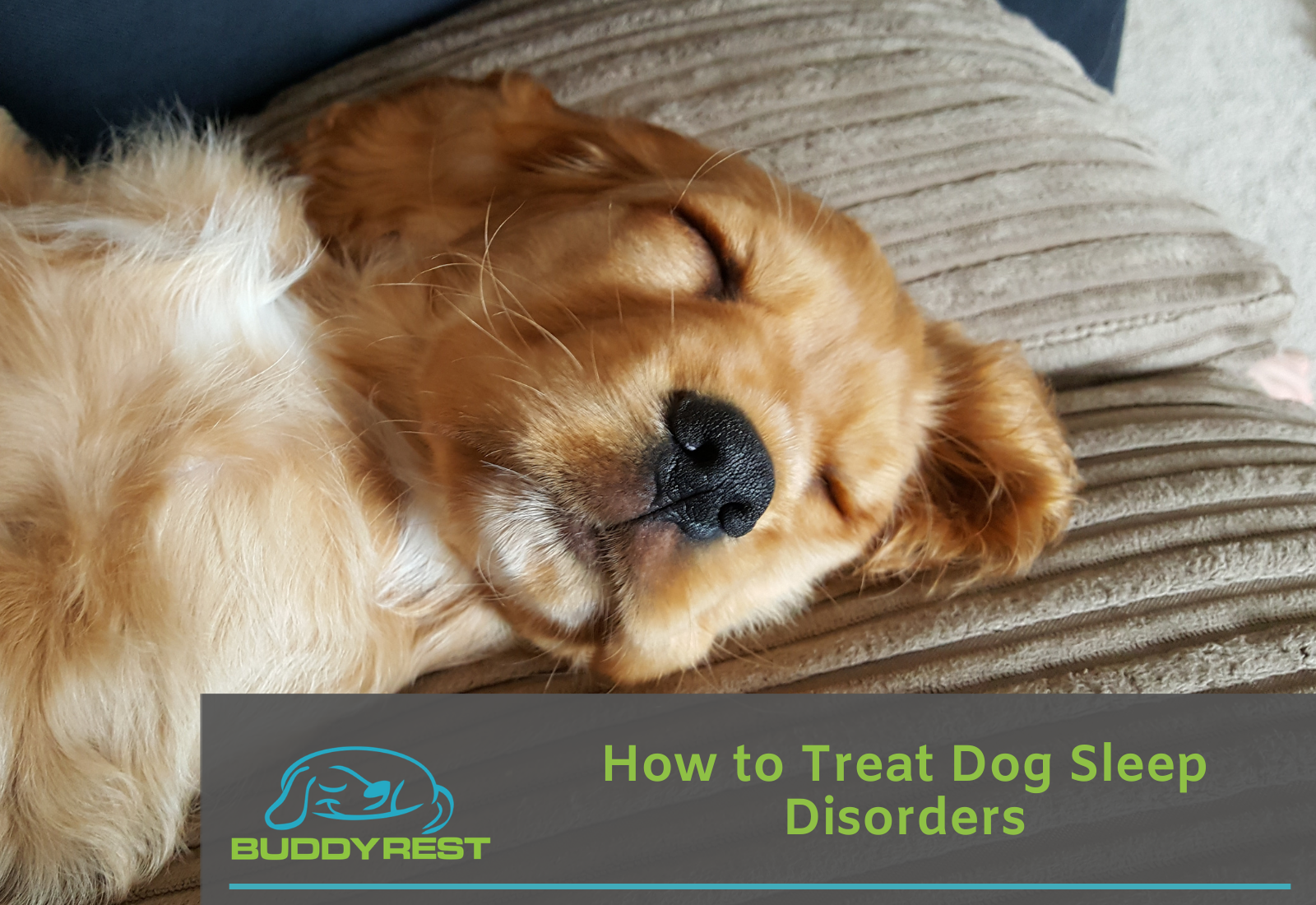 How to Treat Dog Sleep Disorders