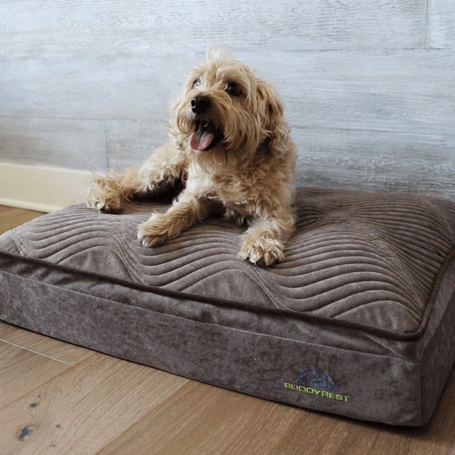 Small brown dog laying on a mocha buddyrest affinity dog bed
