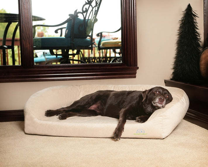 large older chocolate lab laying on beige buddyrest divinity dog bed