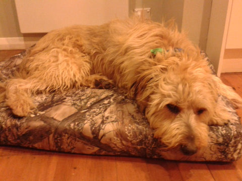 Shaggy golden dog laying on a camo dog bed