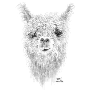 Naming The Alpaca / Llama