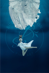 Arctic Swan - Suzanne Barton - Limited Edition