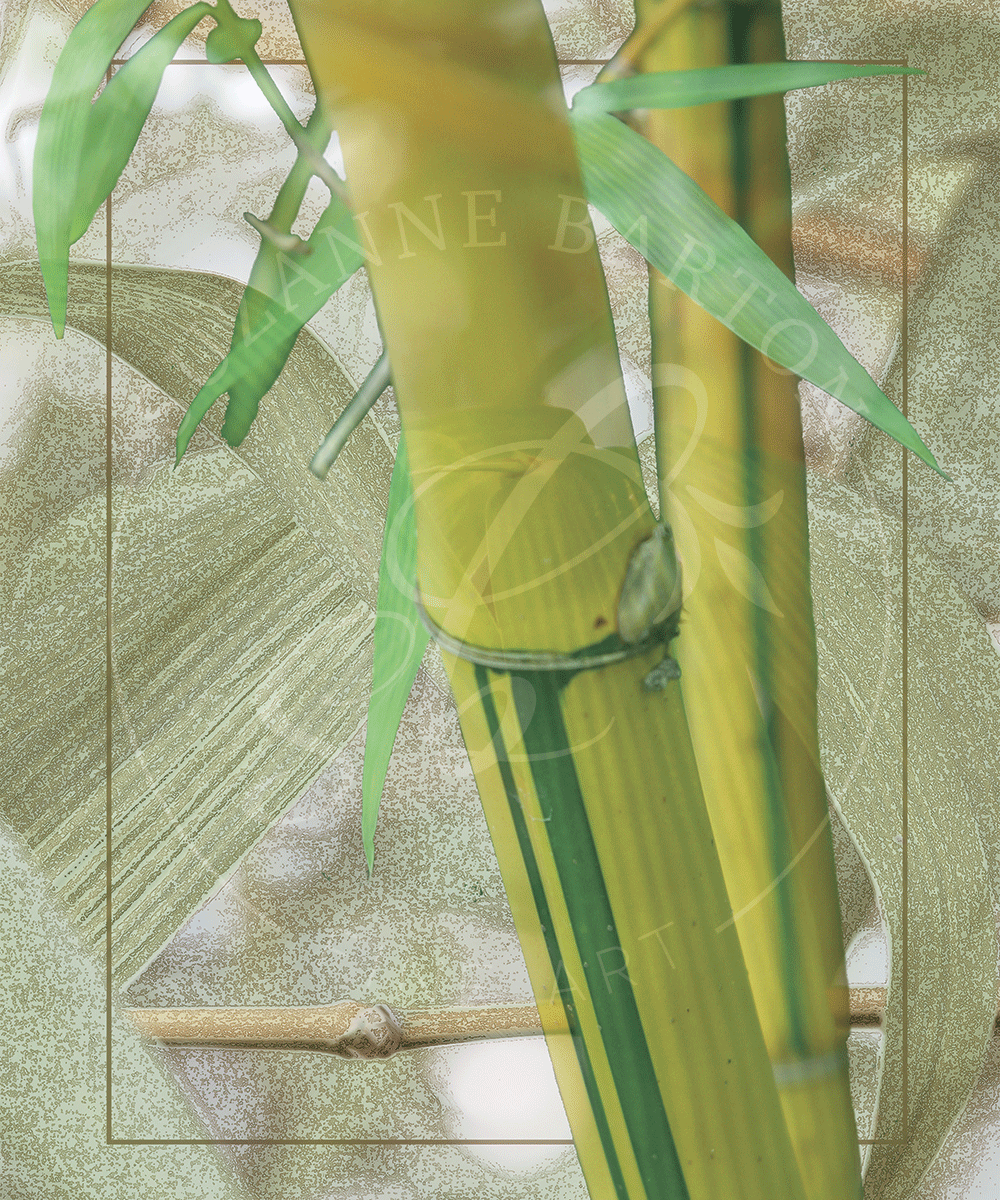 Bamboo - Suzanne Barton - Limited Edition