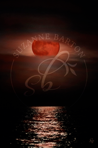 Blood Moon - Suzanne Barton - Limited Edition