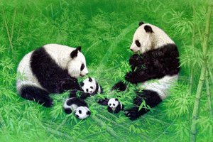 Panda Family - Suzanne Barton - Limited Edition