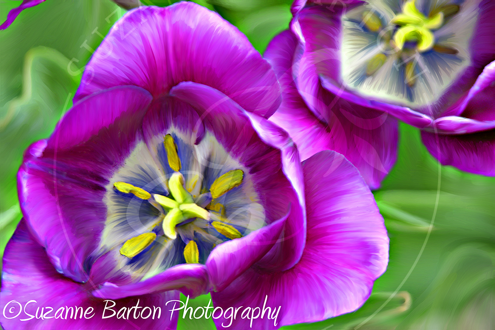 Purple Power - Suzanne Barton - Limited Edition