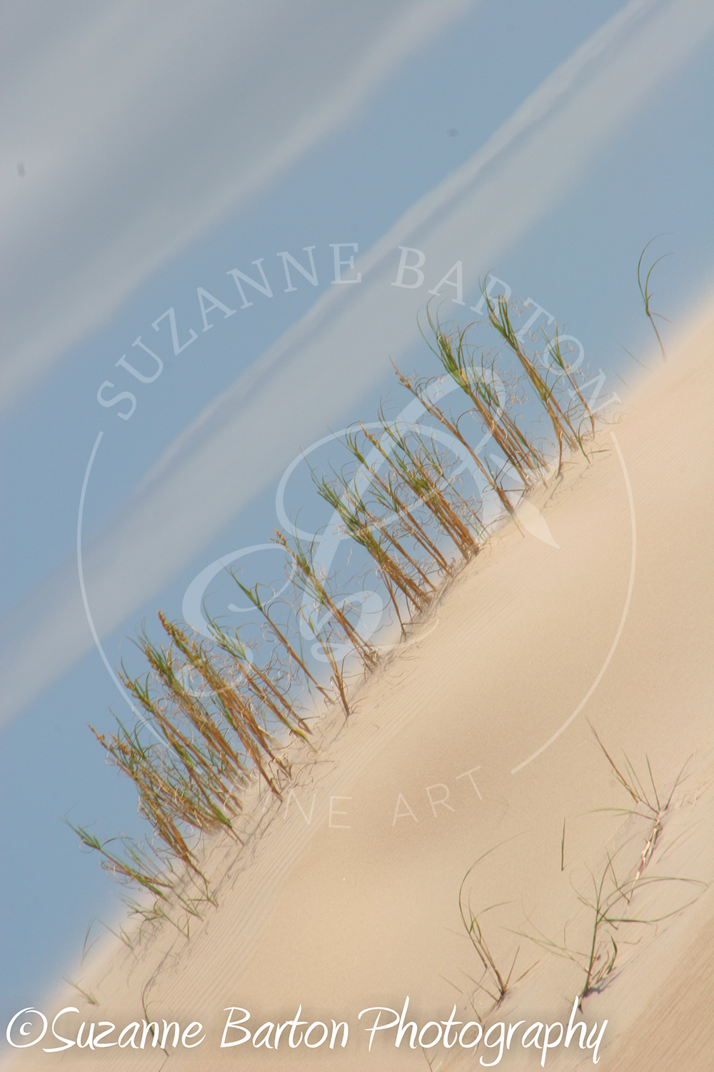 Sand Dunes - Suzanne Barton - Limited Edition