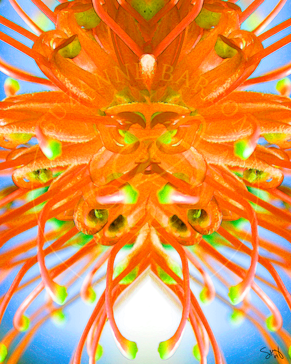 Sea Urchin - Suzanne Barton - Limited Edition