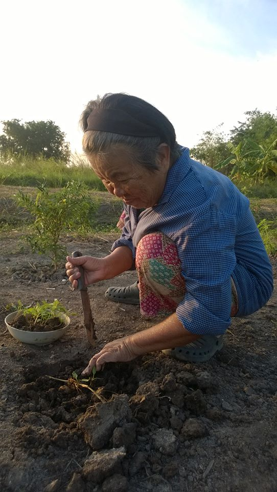 Thai elder woman sitting on the ground, smiling, looking down at a small growing herb about to plant in the soil