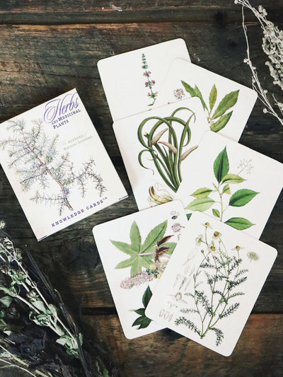 Knowledge Cards Herb & Medicinal Plants