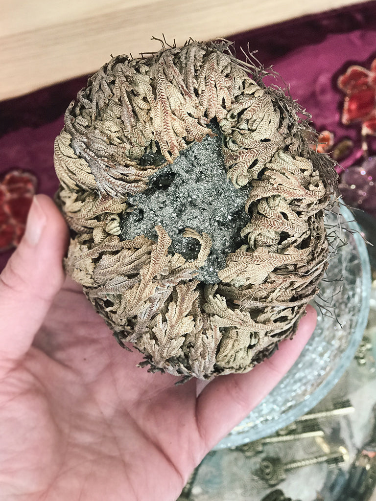 Crystal Filled Rose of Jericho - RJ24
