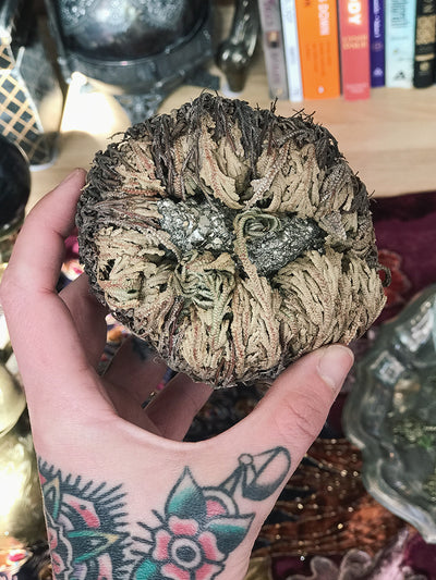 Crystal Filled Rose of Jericho - RJ29