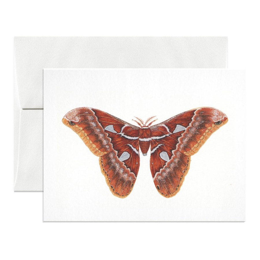 Orizaba Silkmoth Greeting Card