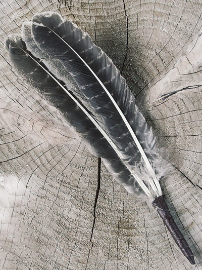rite of ritual gorgeous cleansing feather fan 2