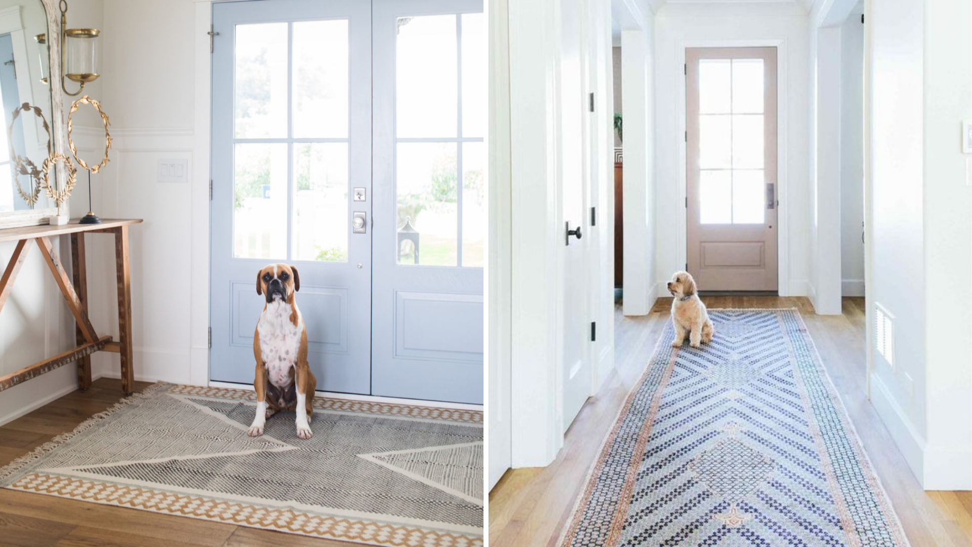 dog friendly rugs