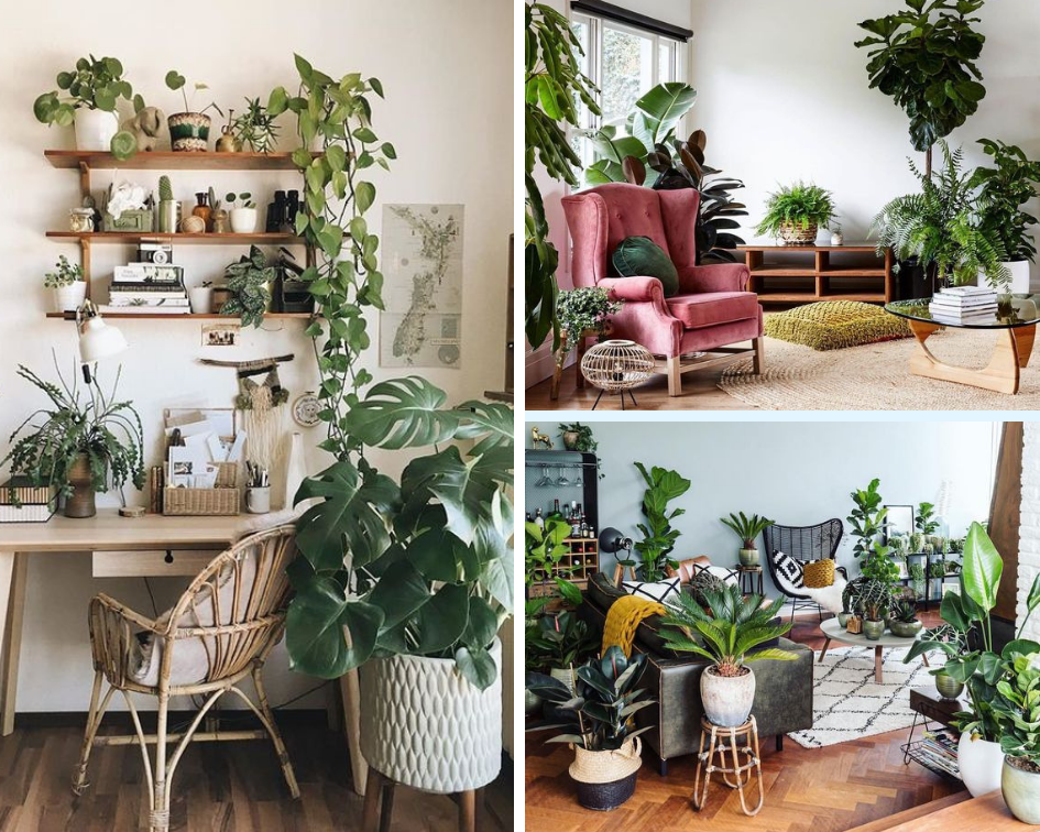 Houseplants, bringing the outside inside, natural elements, interior design, interior design ideas, inspo, blog