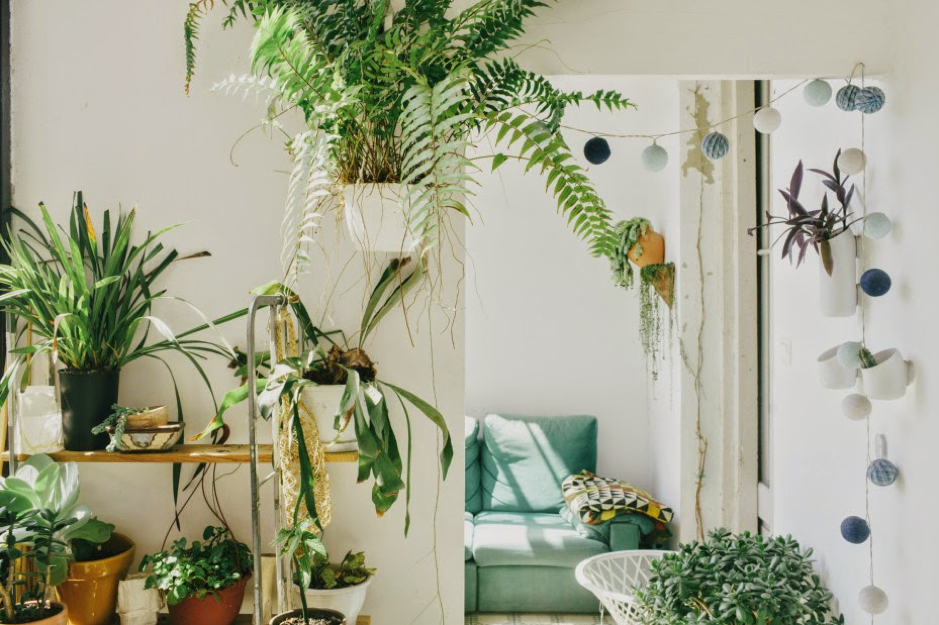 long hanging plants
