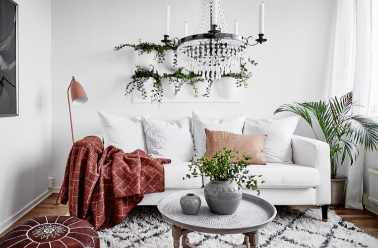 lilla rugs blog plants