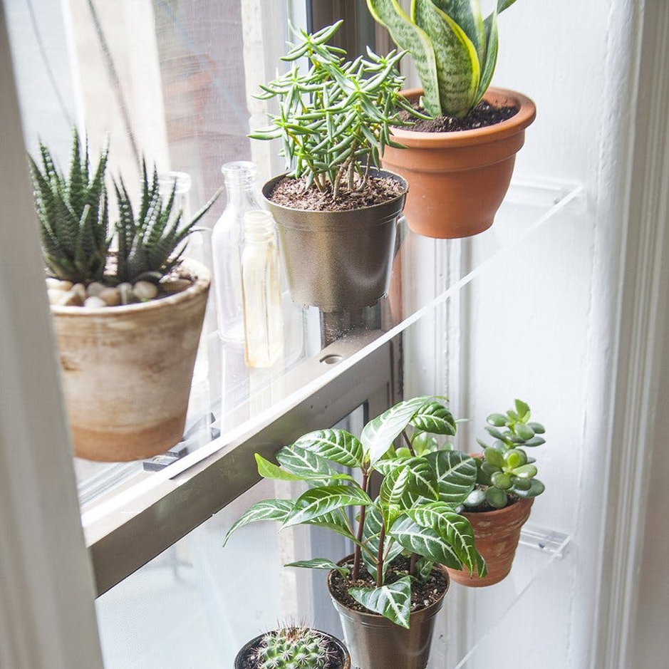 lilla rugs blog plants window sills