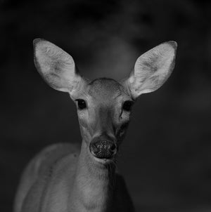 Monster Mule Deer - Author Kevin Lovegreen