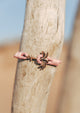 Rosette - Season two Palm anchor bracelet with pink leather. Close up on a tree.