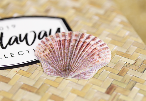 The Castaway Silver Shell Coin - Collectology