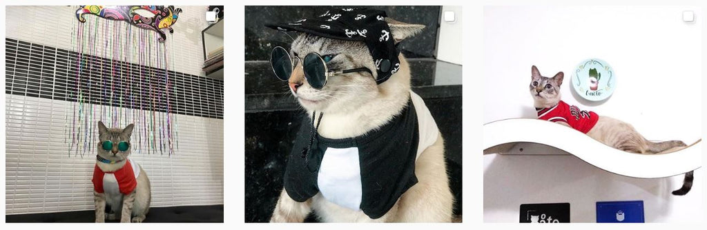 Flash Gatineo - Stylish Cats of Instagram