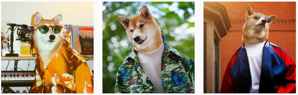 Menswear Dog - Smoke Cartel x HeadyPet - High End Dog Fashion