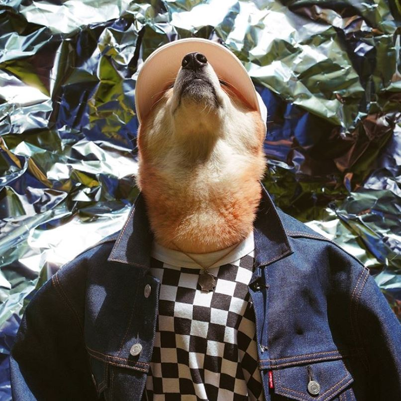 Menswear Dog - HeadyPet Most Stylish Dogs of Instagram