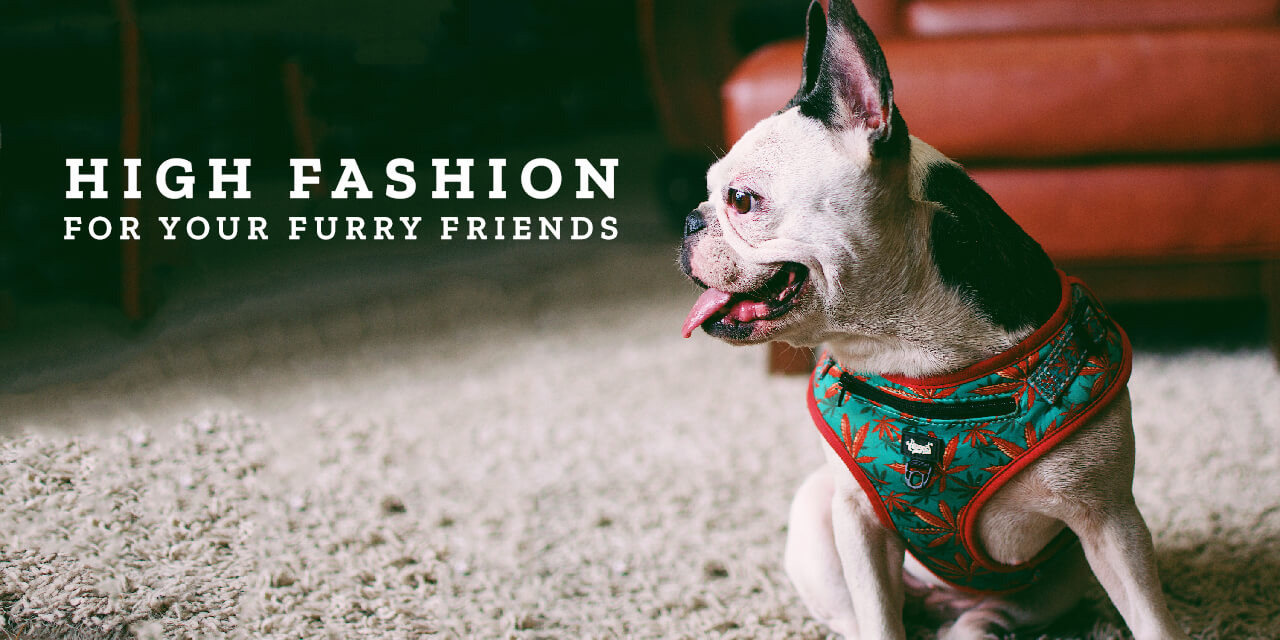 High Fashion for your Furry Friends