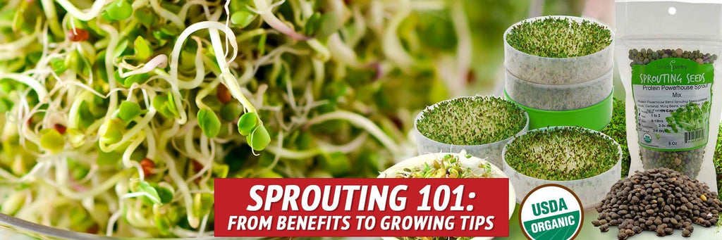 Sprouting 101: From Benefits to Growing Tips