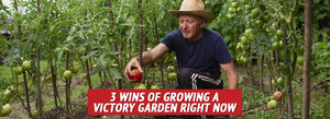 3 Wins of Growing a Victory Garden Right Now