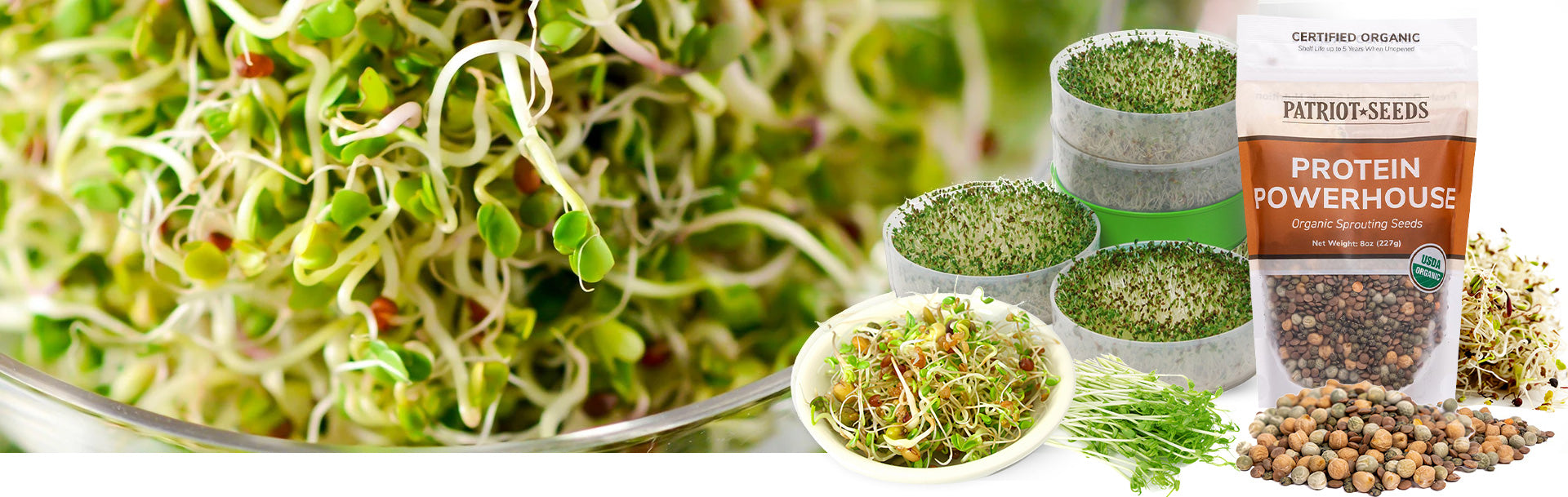 Sprouting Seeds & Micro Greens - potent sources of many vitamins, minerals, amino acids