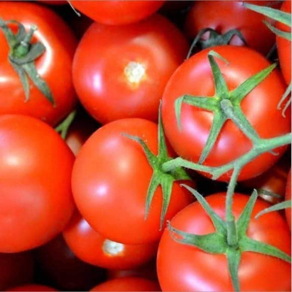 Abe Lincoln Tomato Seeds (250mg) - My Patriot Supply