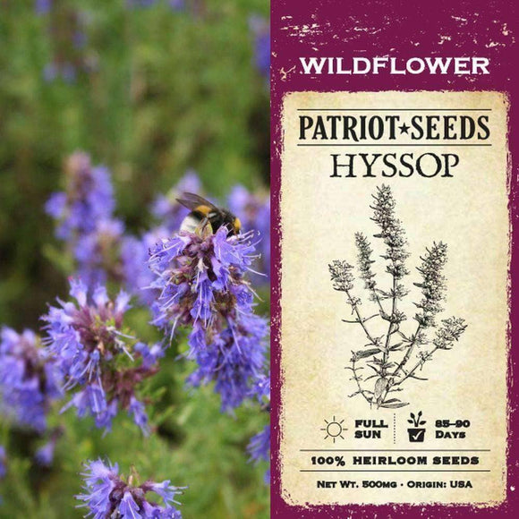 Hyssop Herb Seeds (500mg)