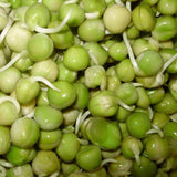 Organic Green Pea Sprouting Seeds (8 ounces)