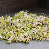 Organic Chinese Cabbage Sprouting Seeds (4 ounces) - My Patriot Supply
