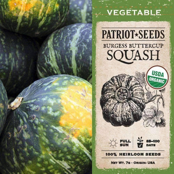 Organic Burgess Buttercup Winter Squash Seeds (7g) - My Patriot Supply