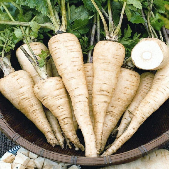 All American Parsnip Seeds (1g) - My Patriot Supply