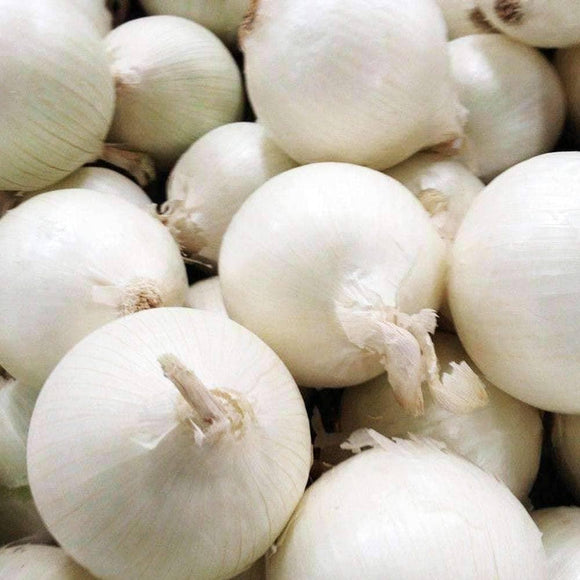 White Sweet Spanish Onion Seeds (500mg) - My Patriot Supply