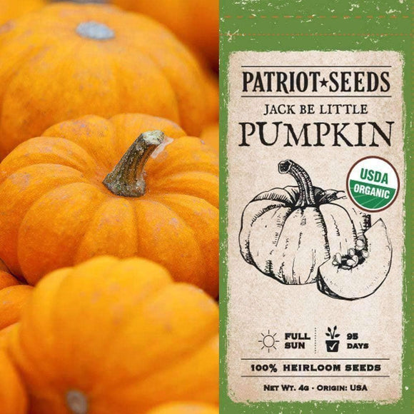 Organic Jack Be Little Pumpkin Seeds (4g) - My Patriot Supply