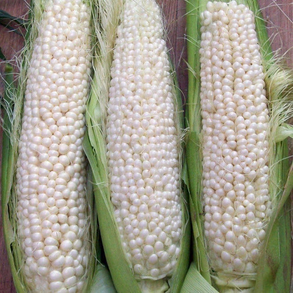 Country Gentleman Shoepeg - White Sweet Corn Kernels (28g) - My Patriot Supply